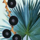 Saw palmetto fruit: for urinary symptoms related to bladder and prostate