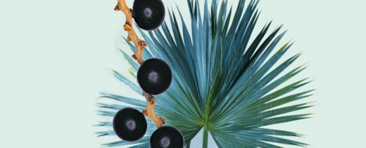 In case of bladder dysfunctioning and benign prostate enlargement, the saw palmetto fruit has long been used in folk medicine as a natural medicinal substance.